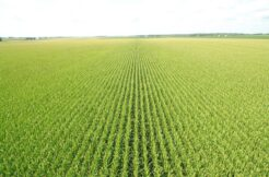 240 Acres m/l in Benton County for Rent for the 2020 Crop Season!