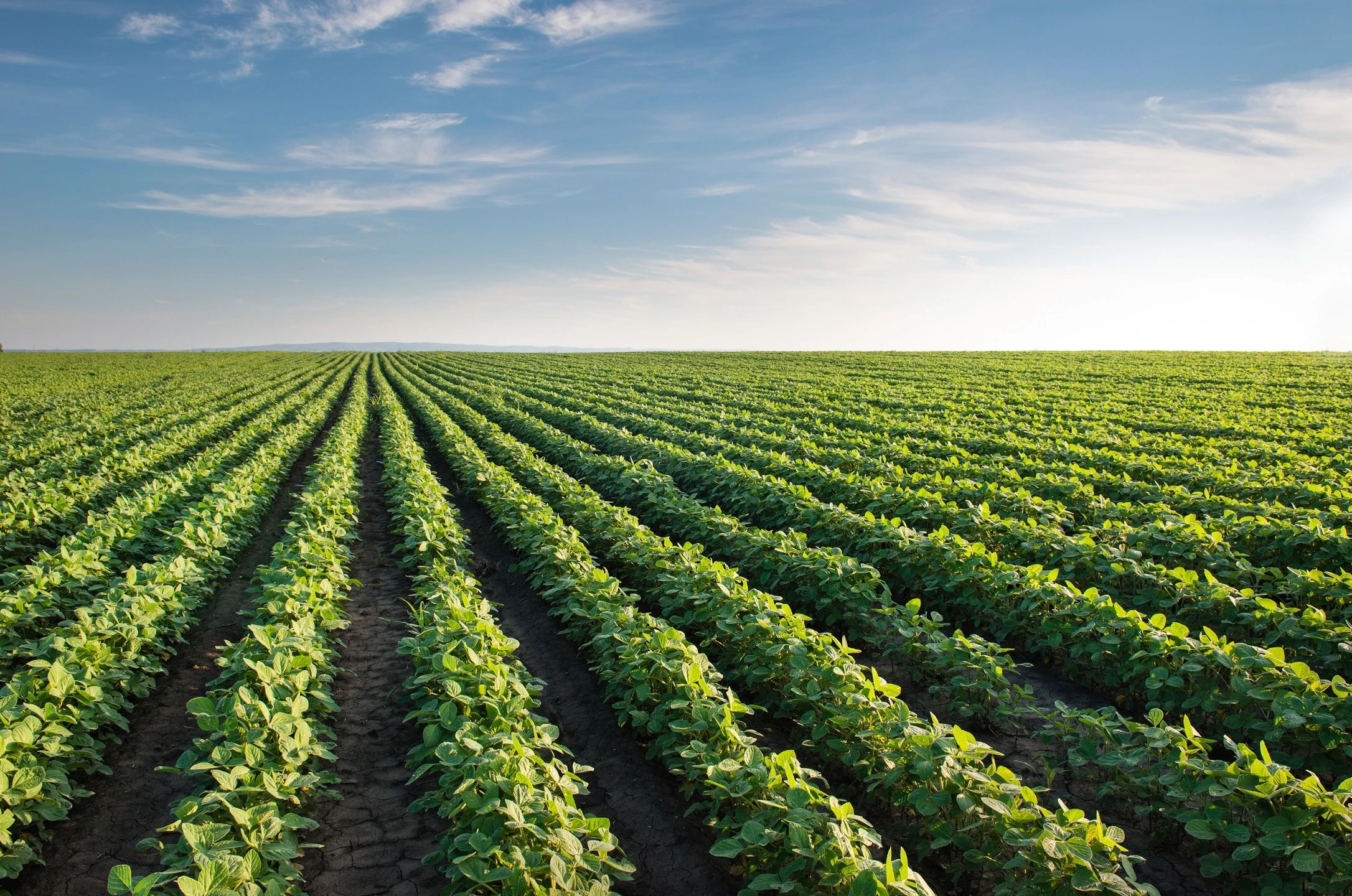 160 Acres M/L in Northern Benton County for Rent for the 2020 Crop Season