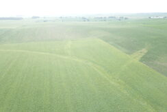 40 acres of great row crop ground!